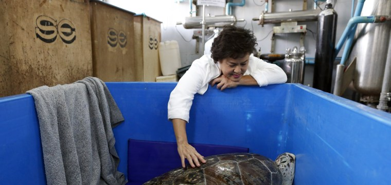 Sea Turtle With Stomachache Has Surgery to Remove 915 Coins