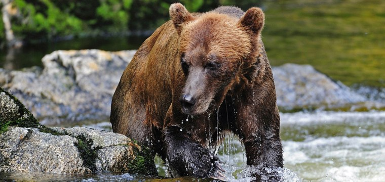 Senate Votes to Overturn Obama-Era Hunting Limits of Alaskan Wildlife on Federal Land