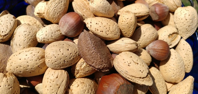 Allergic to Peanuts? Tree Nuts May Be OK