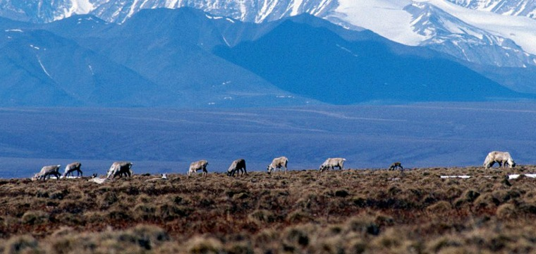 GOP Lawmakers Open Door to Arctic Drilling