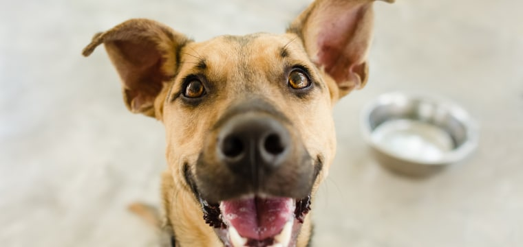 Dogs can't speak human. Here's the tech that could change that.