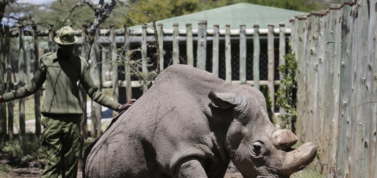 Scientists use test-tube science to save nearly extinct rhino