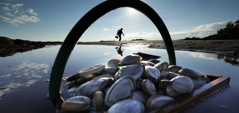 Climate change, not overfishing, is devastating shellfish environments