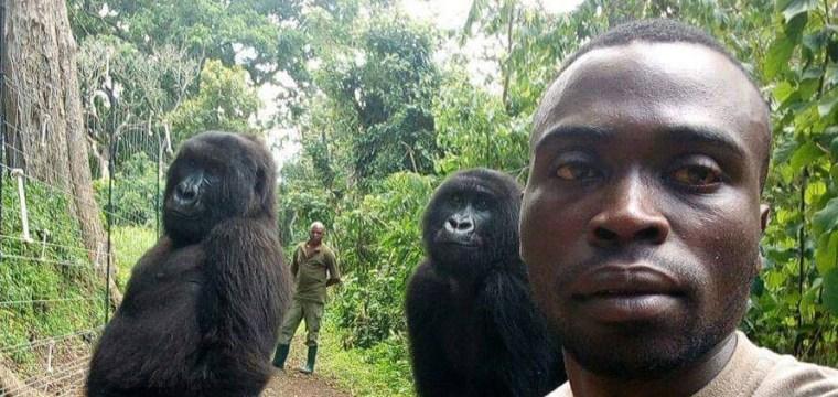 Park ranger's selfie with orphaned gorillas goes viral