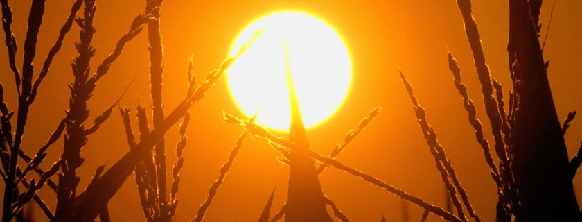 2014 Breaks Record for Warmest Year, NOAA and NASA Experts Say
