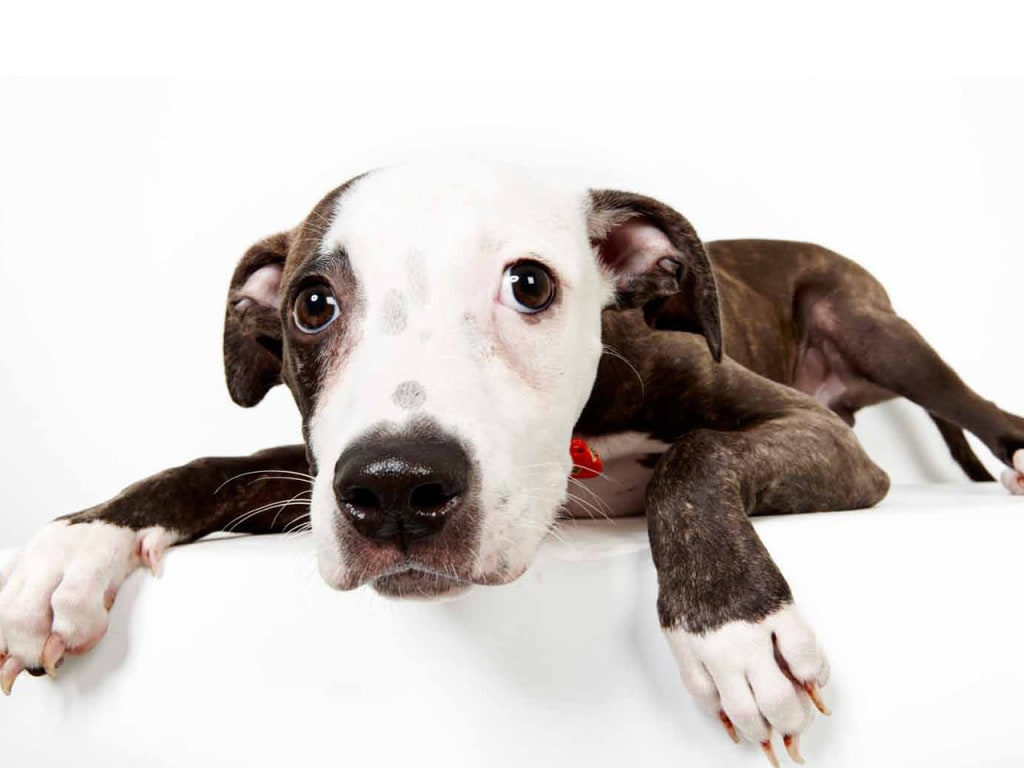 25 adorable animals up for adoption NBC News