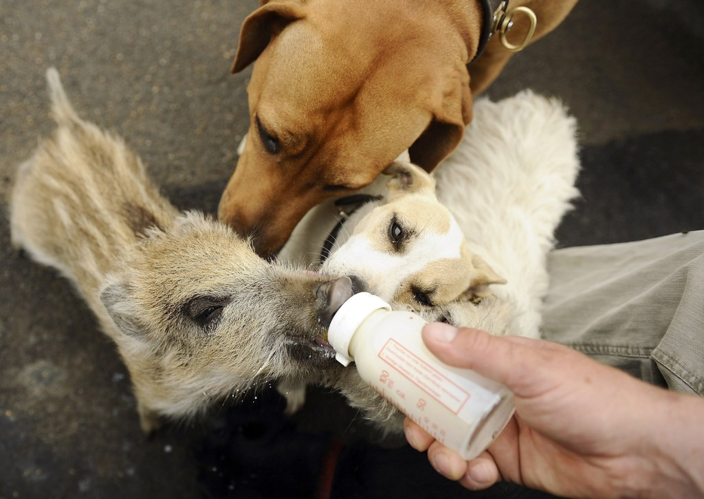 Nbc Dog Protecting Puppy