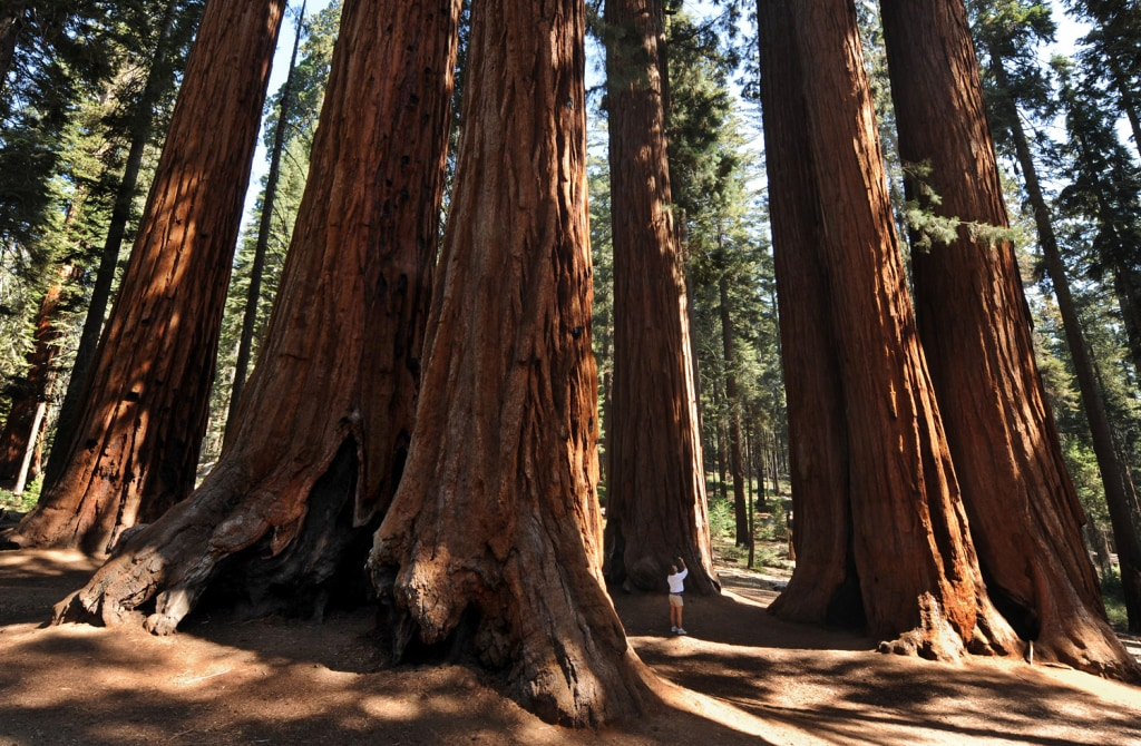 Pictures of sequoia national park