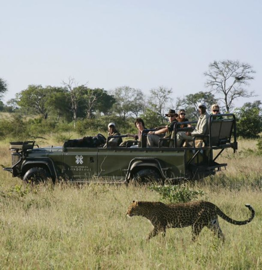 Image: Londolozi Game Reserve: Cathedral of the Wild