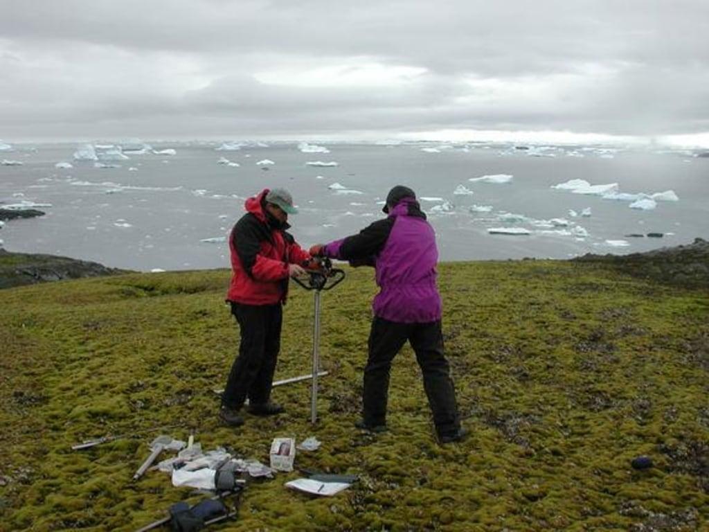 Moss Antarctica