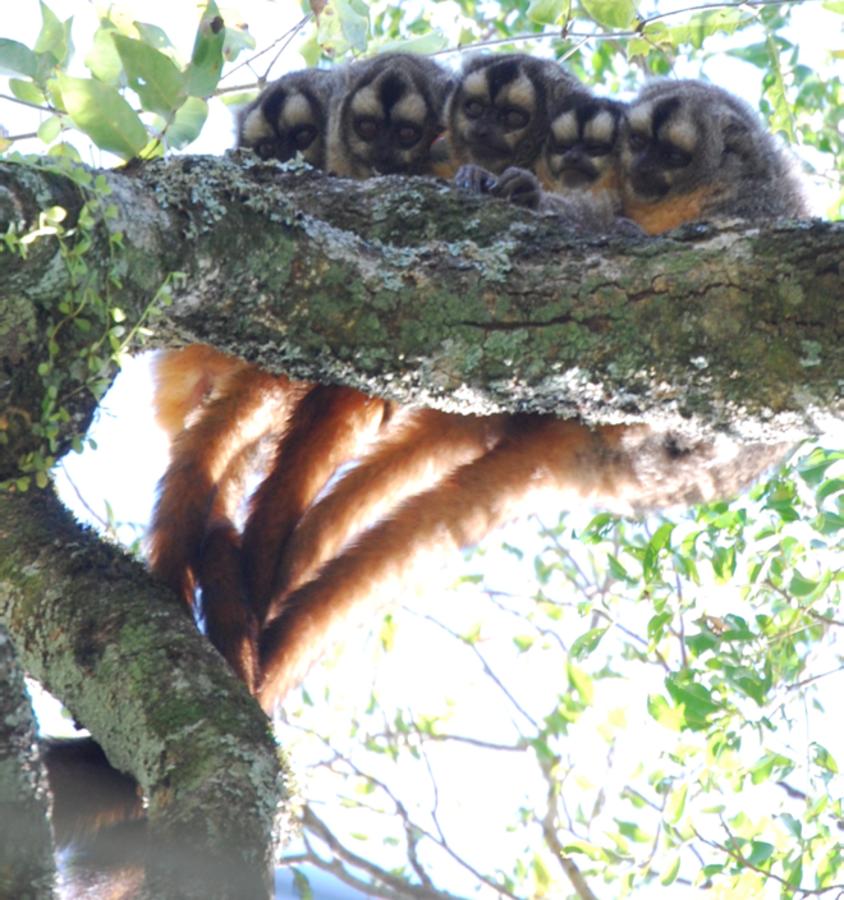 Image: Monkeys