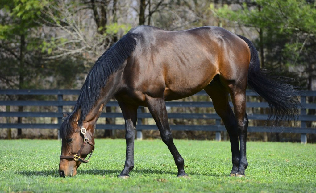 Image: Racehorse Valediction, retired in Virginia