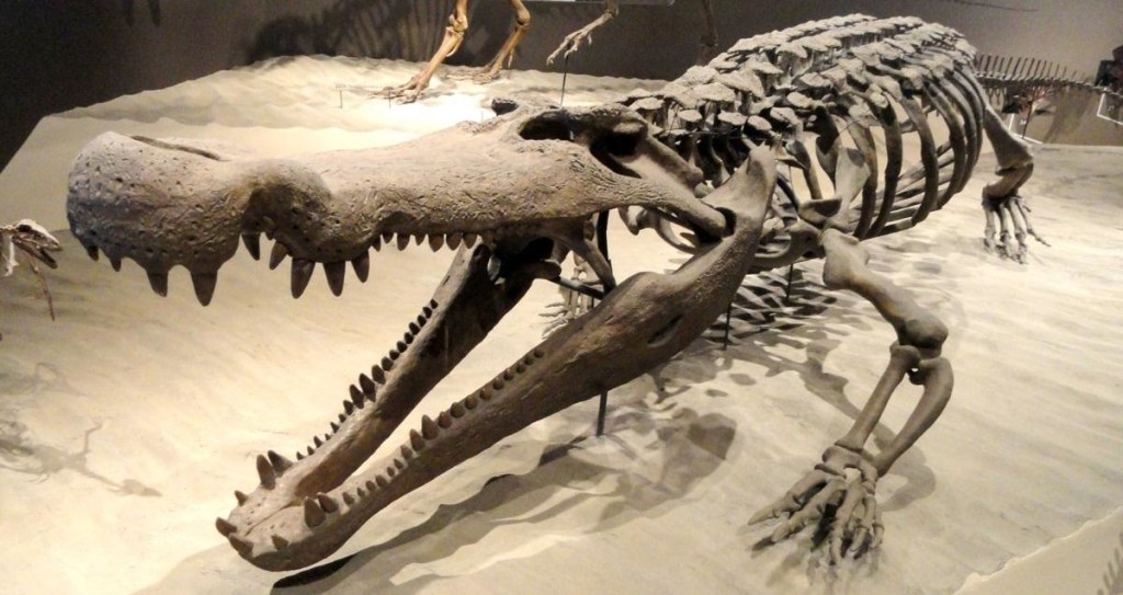 Image: Deinosuchus, a crocodilian from North America