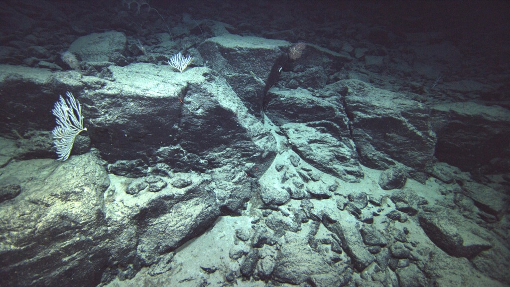 Image: Miscellaenous lava formations from the underwater Ka'ena Volcano in Hawaii