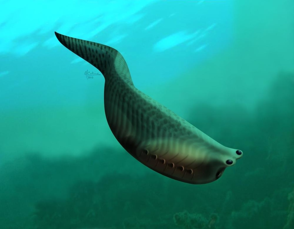 Image: Fossilized fish, called Metaspriggina