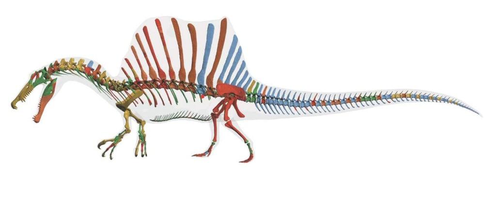 Image: Spinosaurus bones