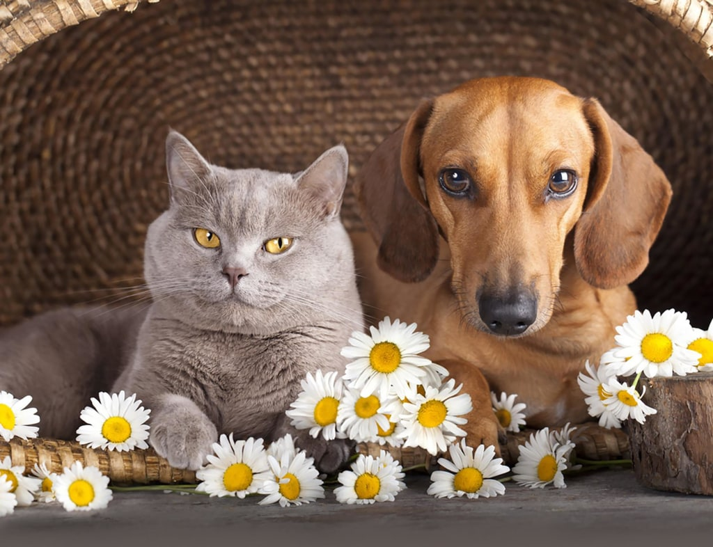 Image: Cat and dog