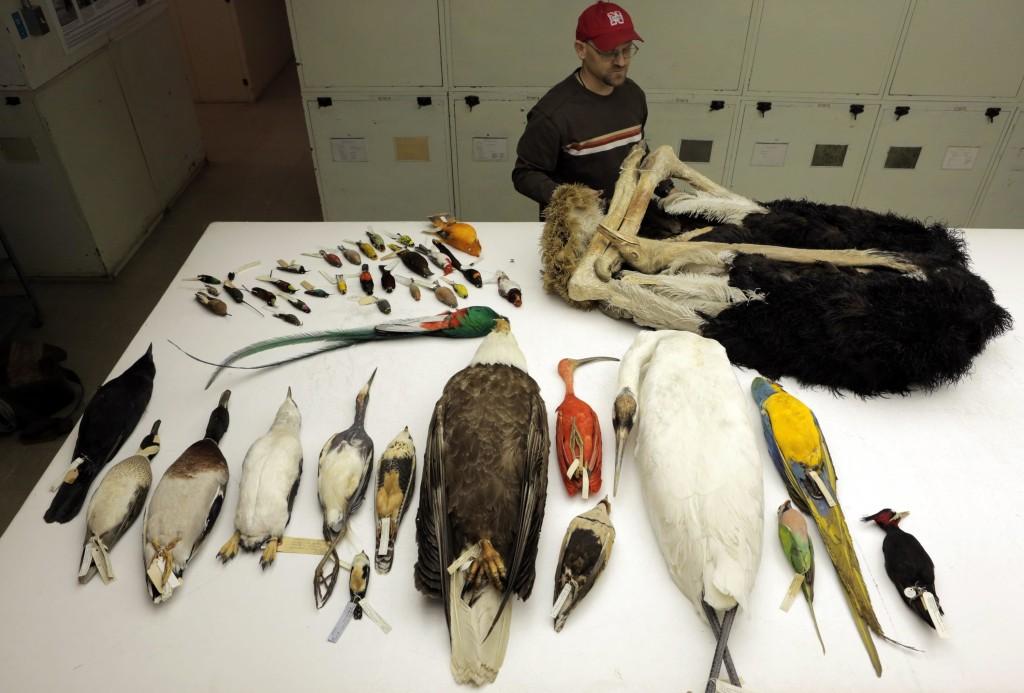 Image: Bird specimens