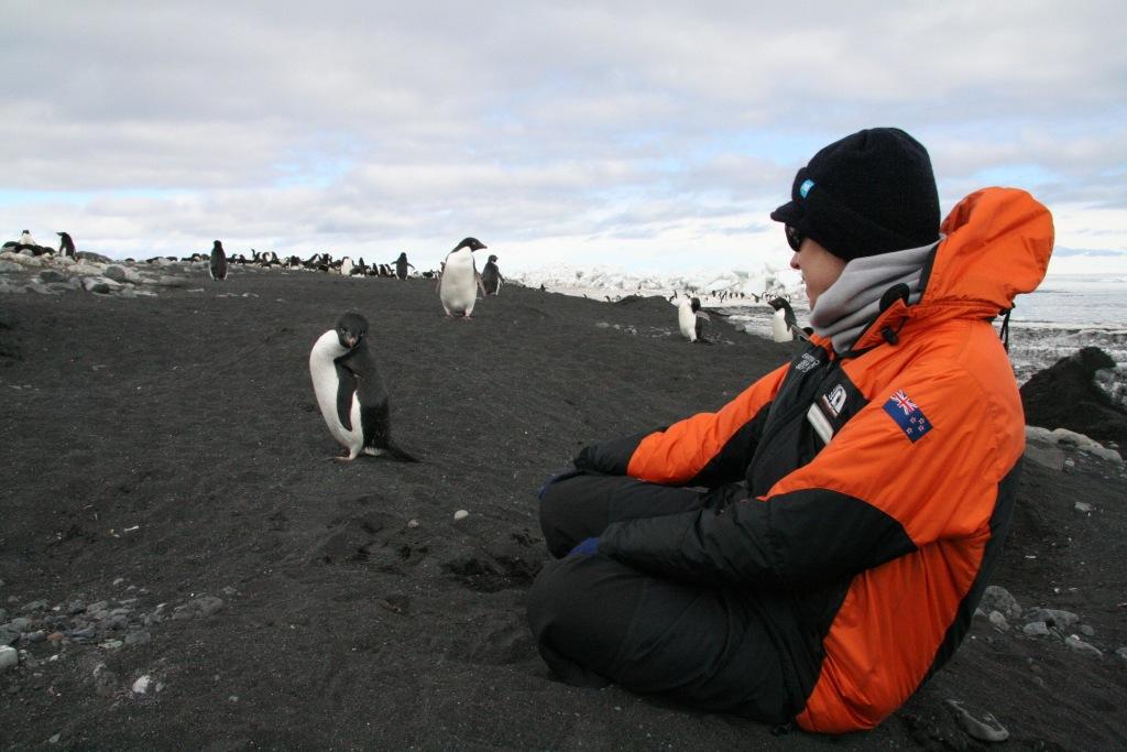 Image: Adelie penguins