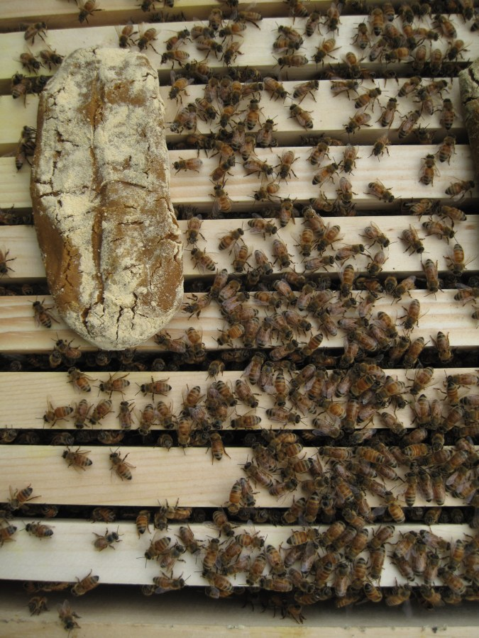 Image: Bee experiment