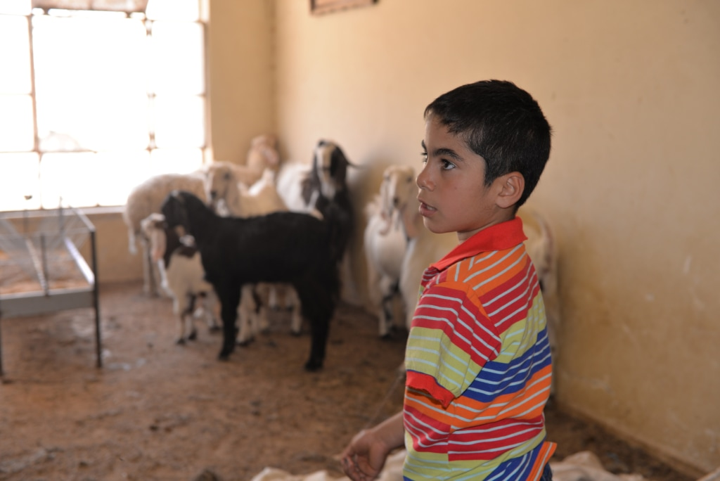 Image: Yousef tends to his goats