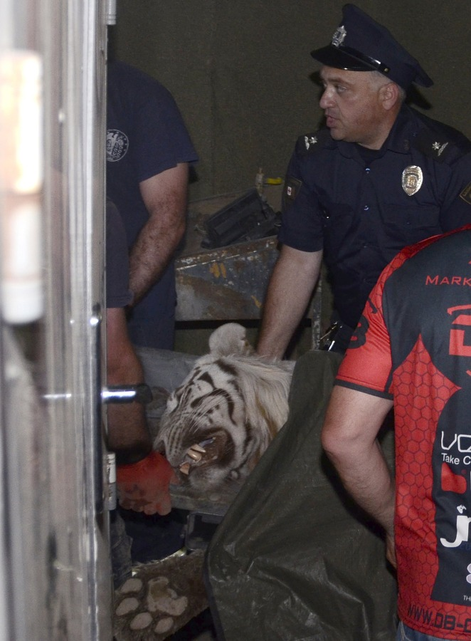 Image: Policeman stands next to a white tiger killed by police in Tbilisi