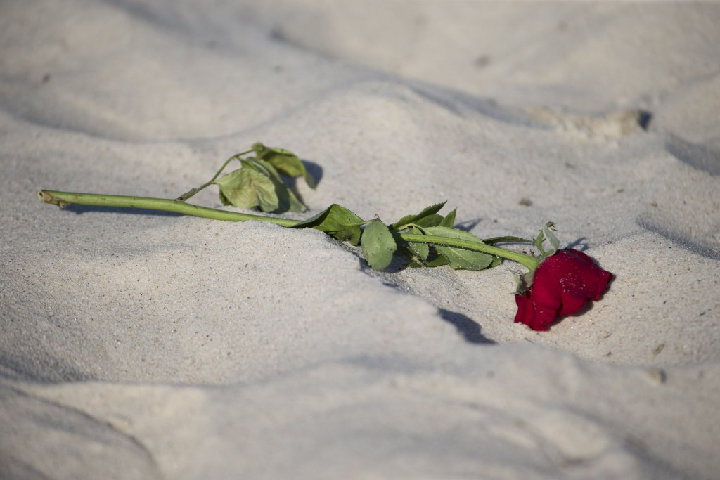 Image: A rose lies on the beach of the Riu Imperial Marhaba Hotel in Port el Kantaoui, scene of Fridays terror attack.