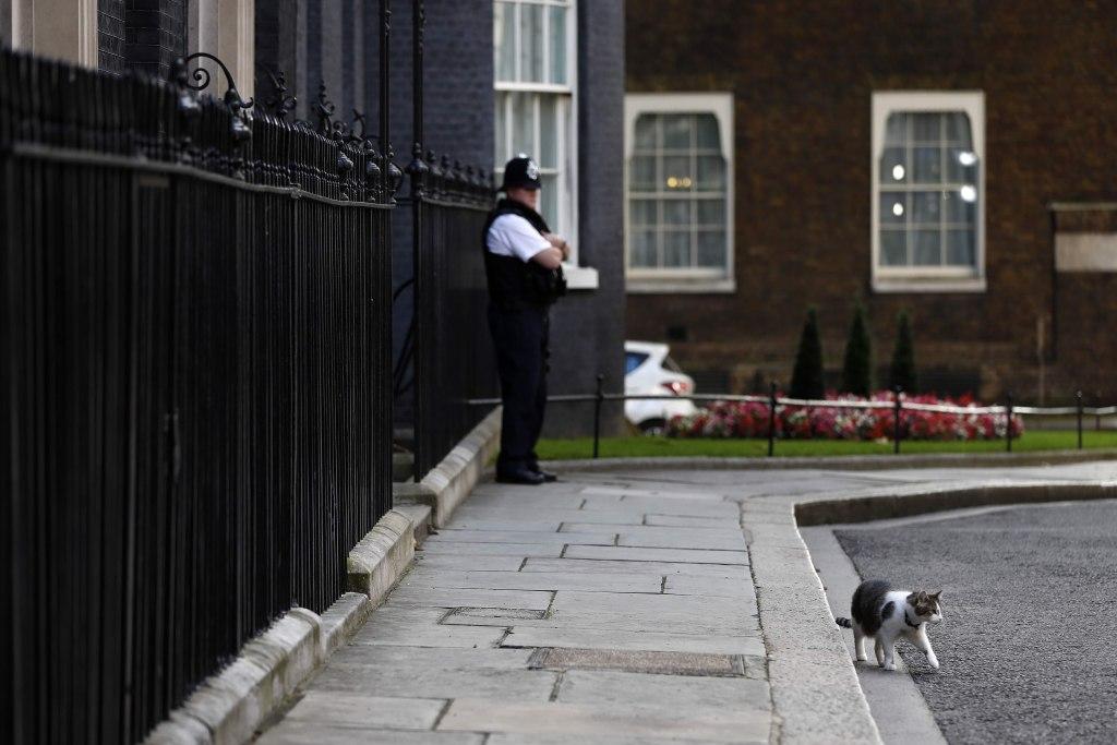 Image: Larry the cat