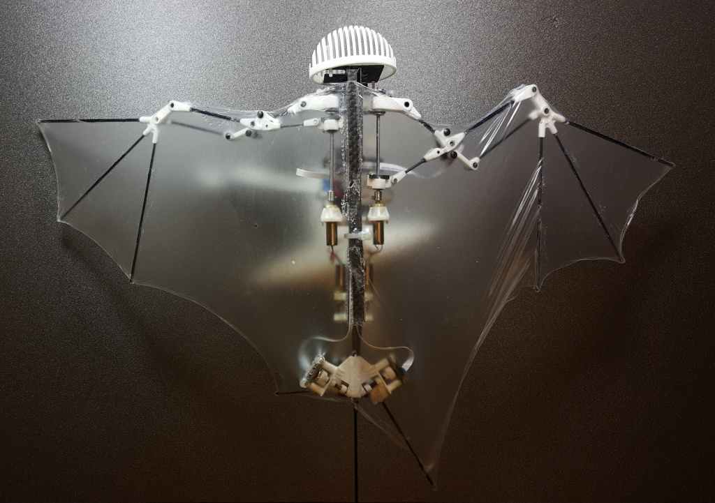 Image: This photo provided by Alireza Ramezani, University of Illinois, shows a Bat Bot, a three-ounce flying robot that they say can be more agile at getting into treacherous places than standard drones. Because it mimics the unique and more flexible way