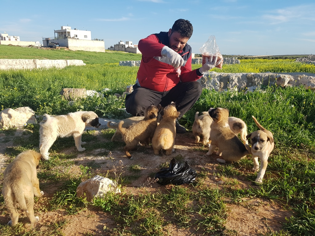 Image: Mohammad Alaa Aljaleel with some stray puppies