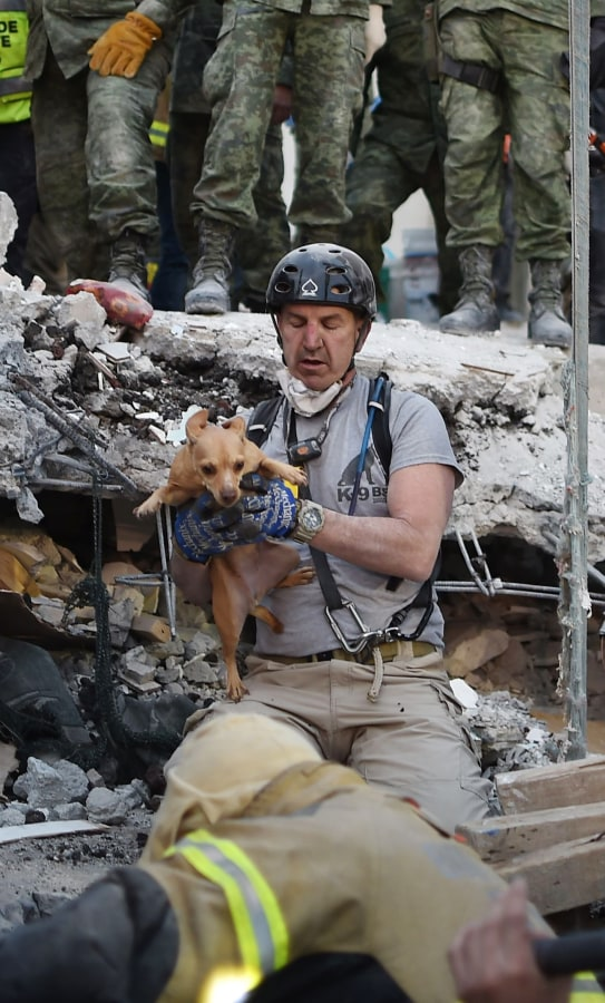 Image: A rescuer pulls a dog out of the rubble during the search for survivors in Mexico City