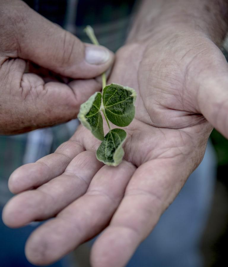 Image: Soybean farmer