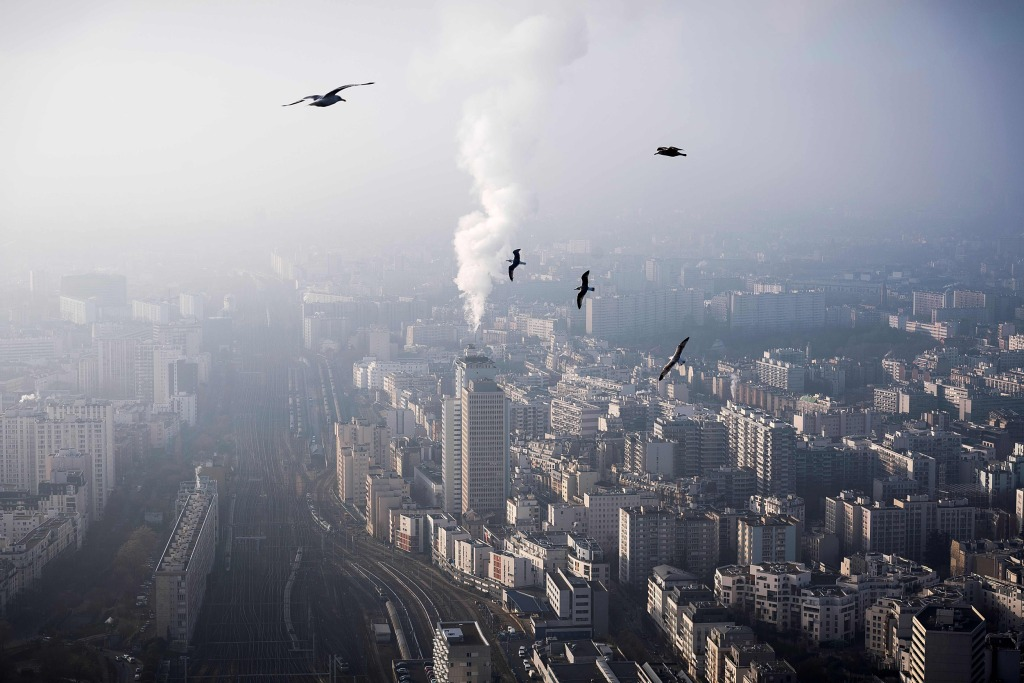 Image: Seagulls flying over the roofs tops of Paris