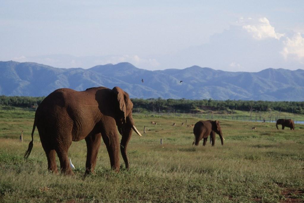 Image: African bush elephant gather near Lake Kariba in Zimbabwe