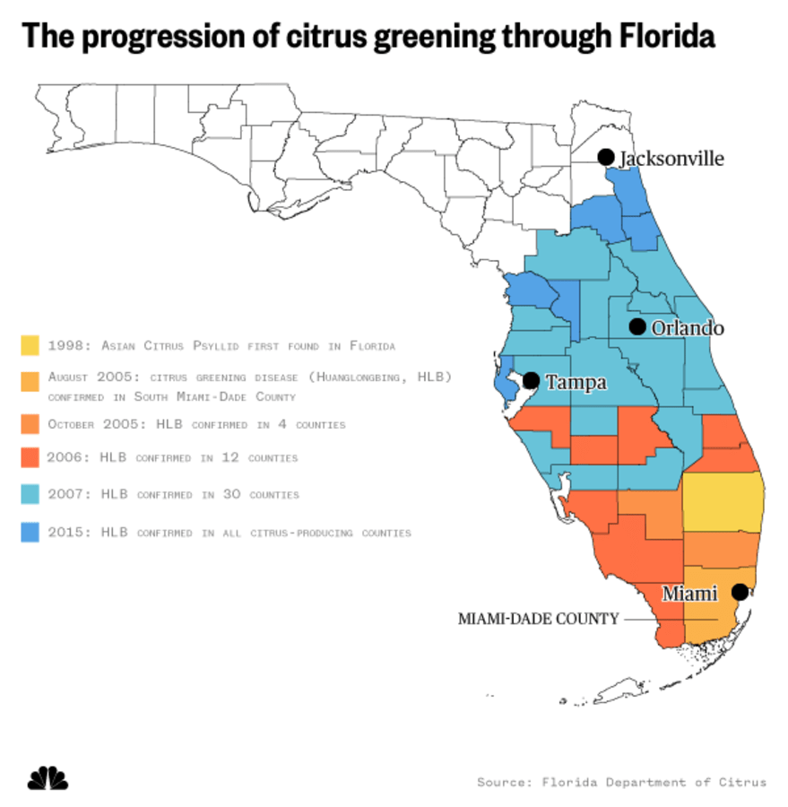 The progression of citrus greening through Florida