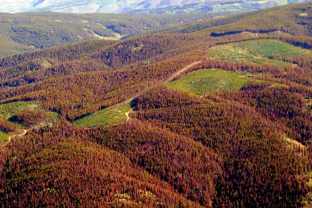 Image of beetle-killed trees