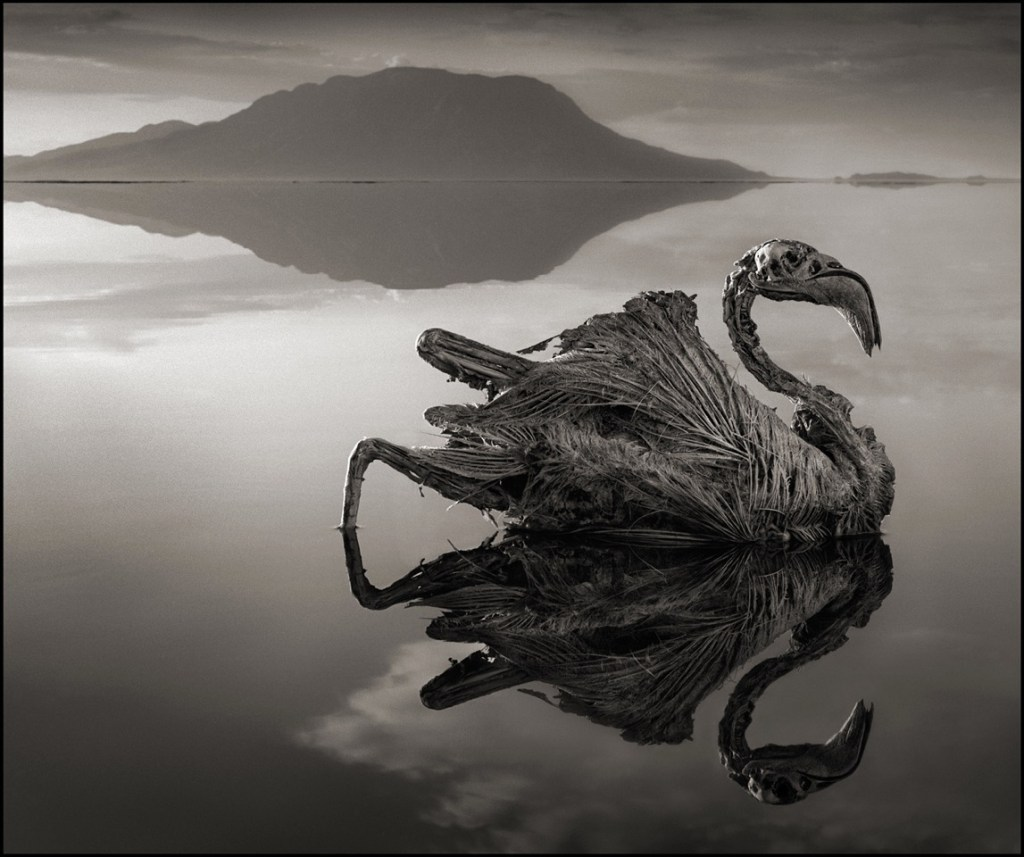 CALCIFIED FLAMINGO, LAKE NATRON, 2010 -- From Nick Brandt's book Across The Ravaged Land (Abrams 2013)