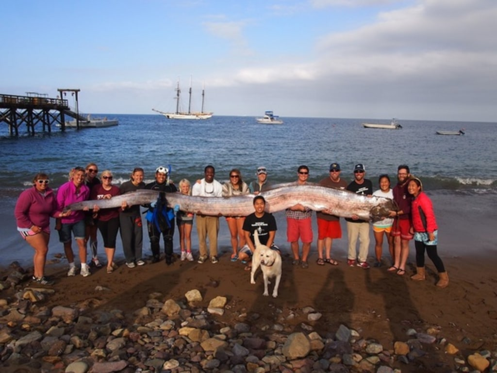 Giant Oarfish Dissected Worms Found In One Eggs In The Other Nbc