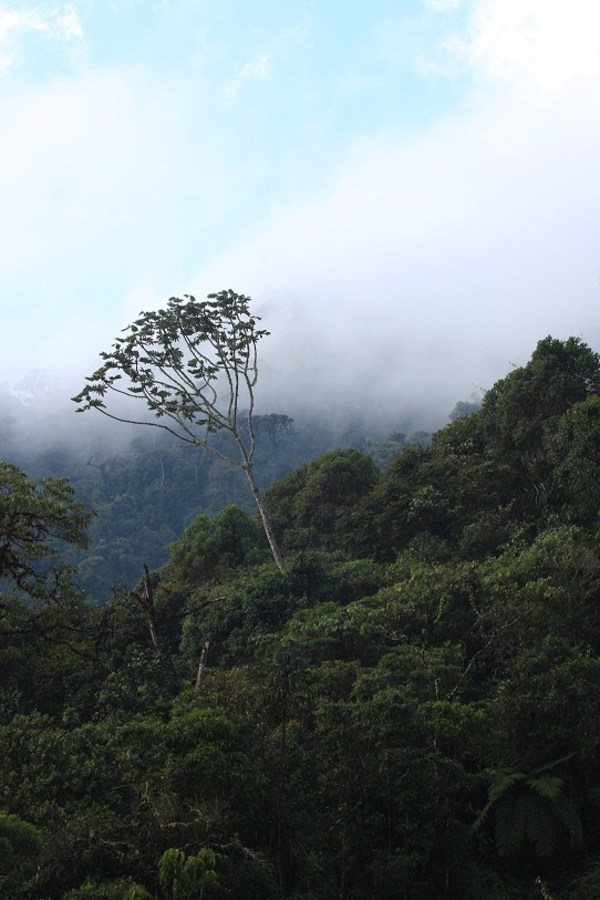Image of cloud forest.