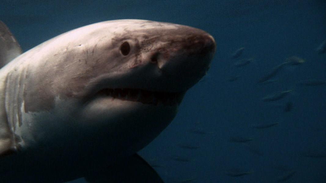 Shark Attacks Aren T Biting Into Tourism Carolinas