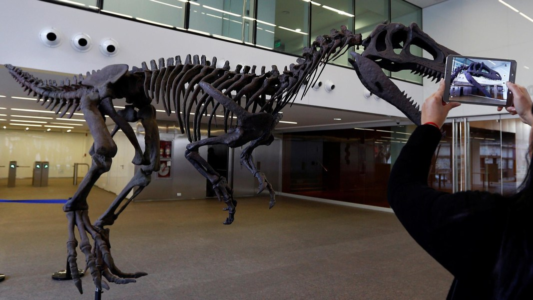 New dinosaur in t rex family discovered in argentina nbc for T rex family