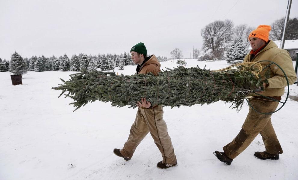 How Can I Make My Christmas Tree Last? - NBC News
