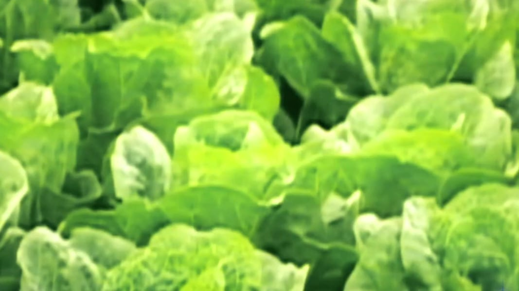 Experts Warn: Throw Out Your Romaine Lettuce. Like, Now