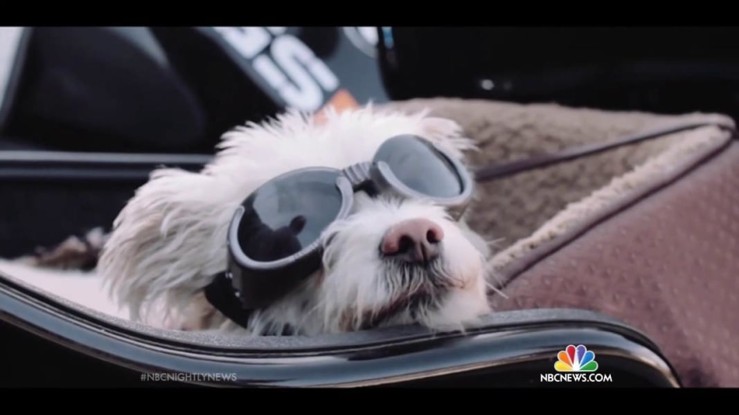 'It's So Cool!': Sidecar Dogs Make Easy Riders - NBC News