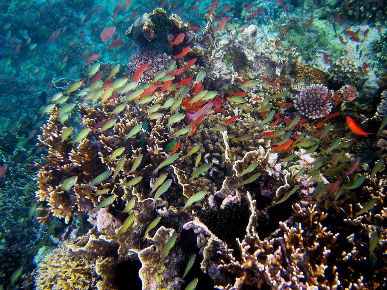 Marine and Coastal Biodiversity