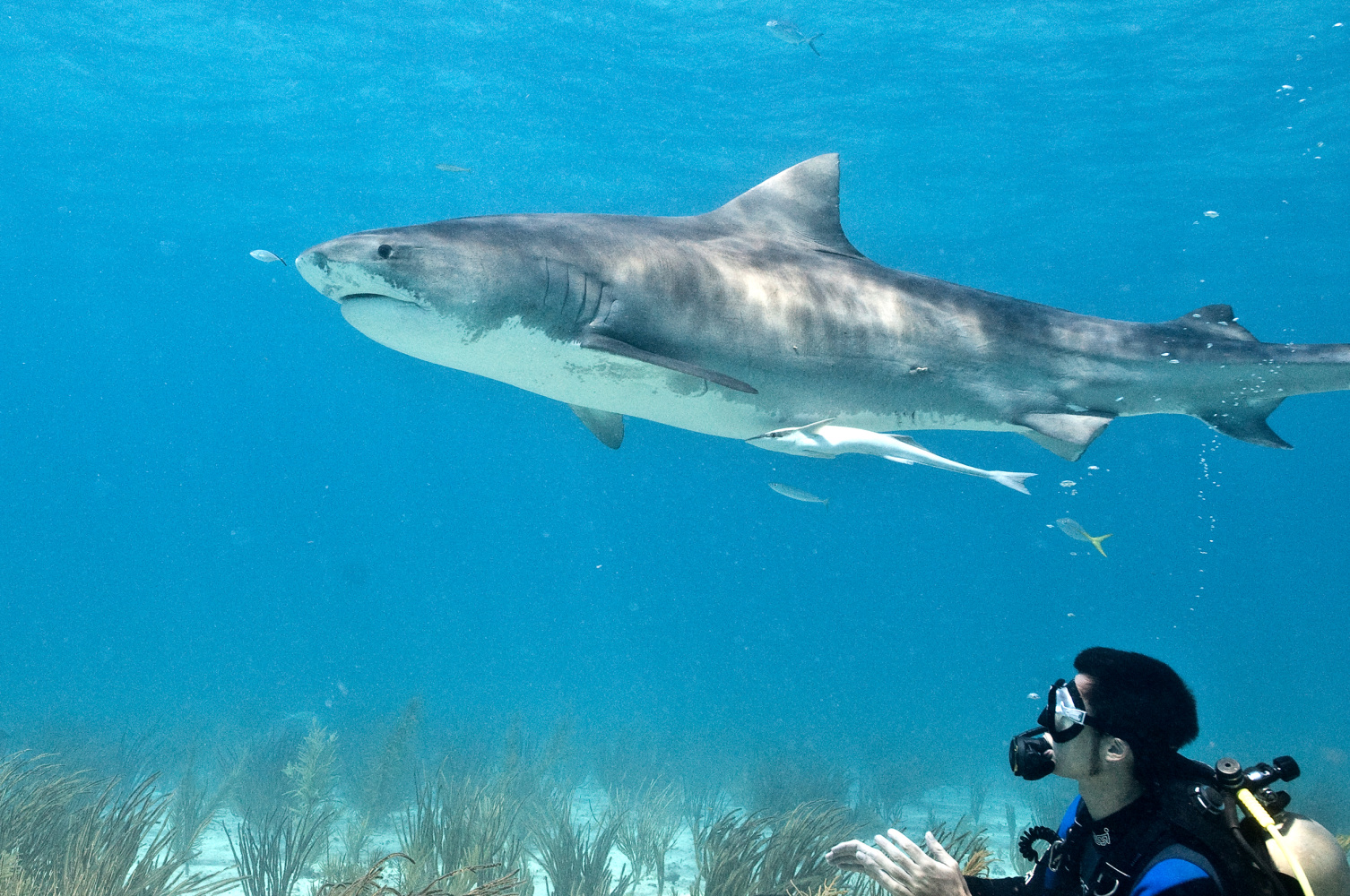 6 sharks that could be responsible for the north carolina attacks