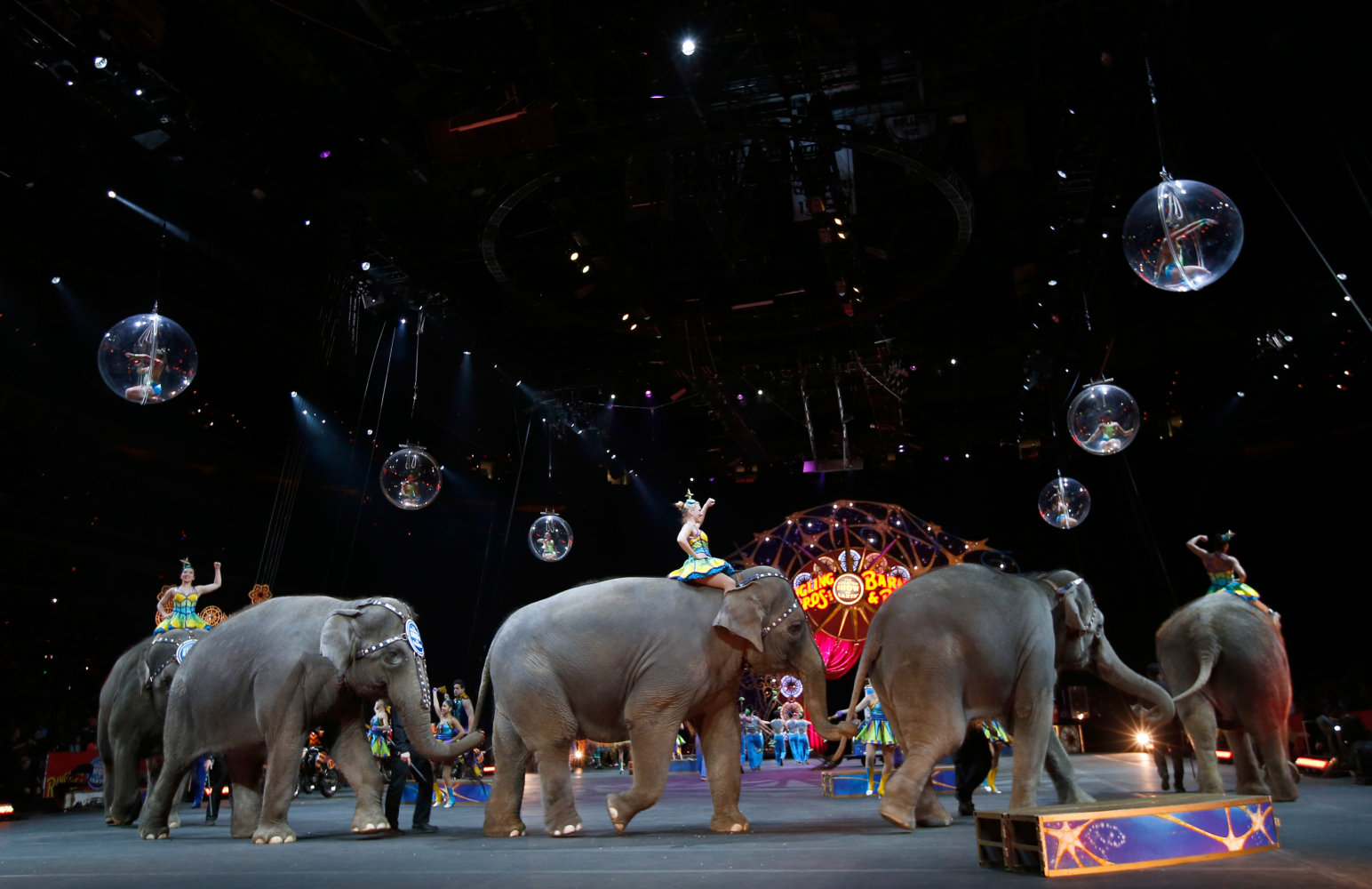 animals in circus Circuses that force animals to perform, such as universoul circus, are the  cruelest shows on earth animals exploited in such performances are abused  and.