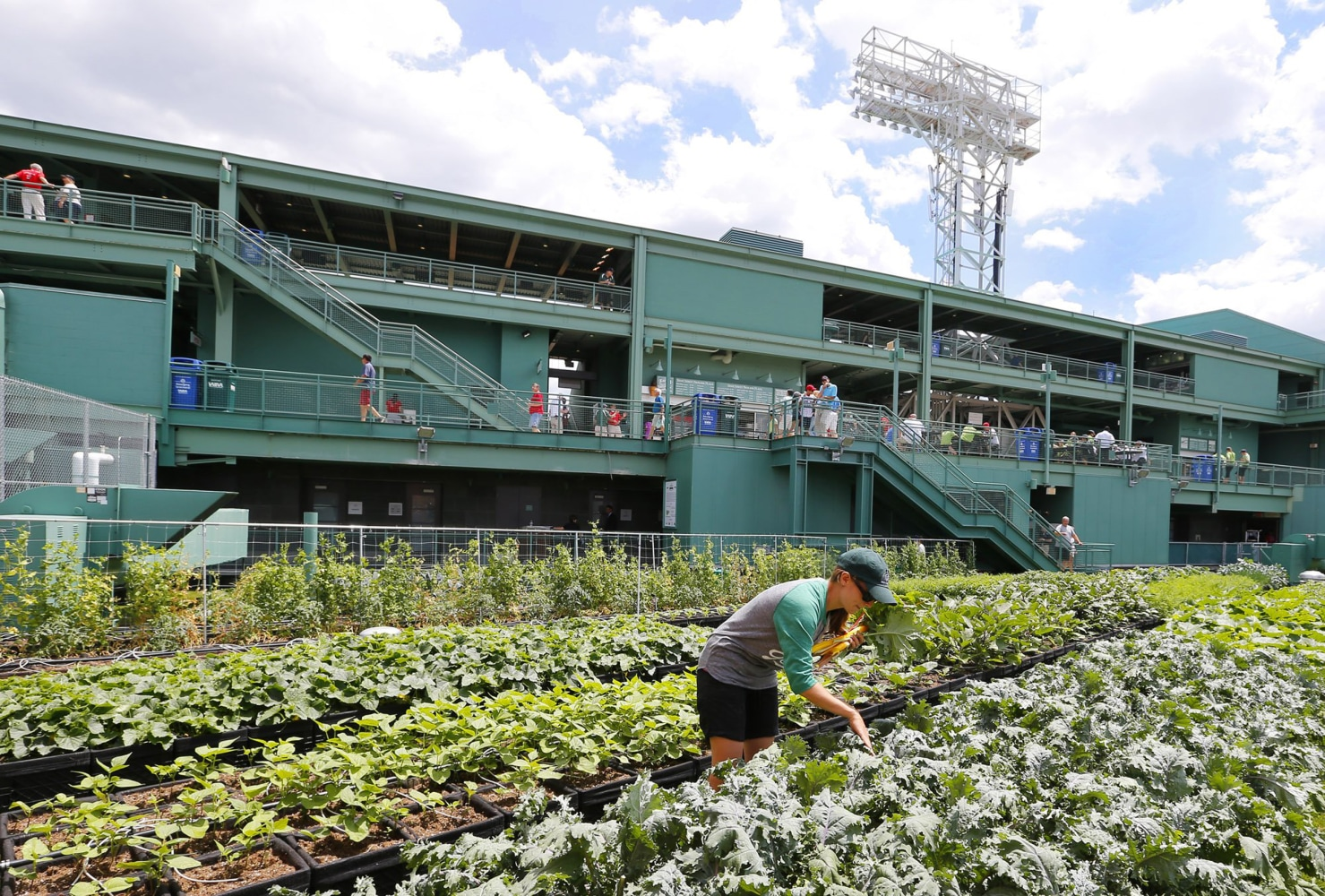 Rooftop Kitchen Garden Farm System Rooftop Garden Is A Hit At Bostons Fenway Park Nbc