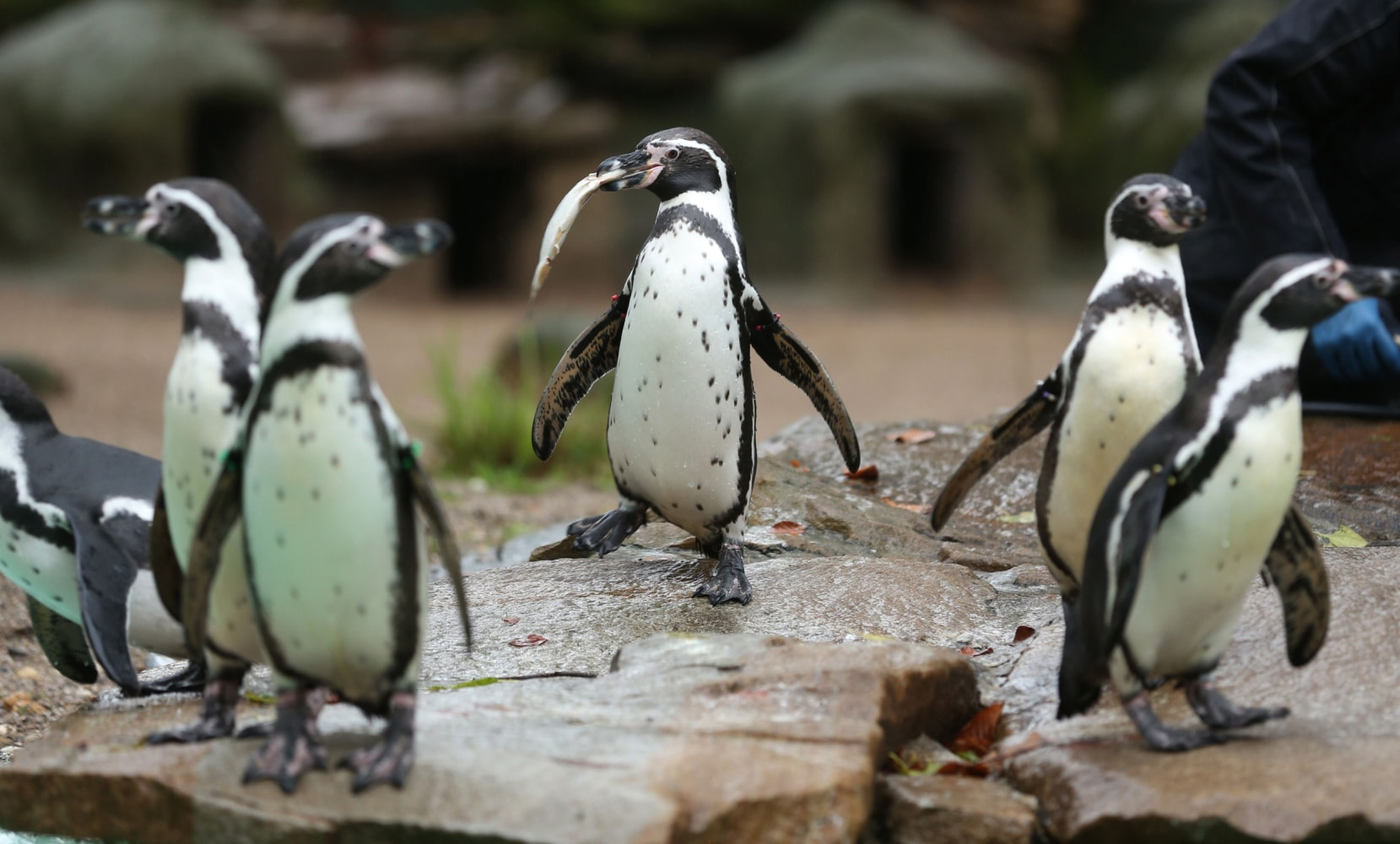Penguin's Death Is Latest Unsolved Mystery to Hit Dortmund ...