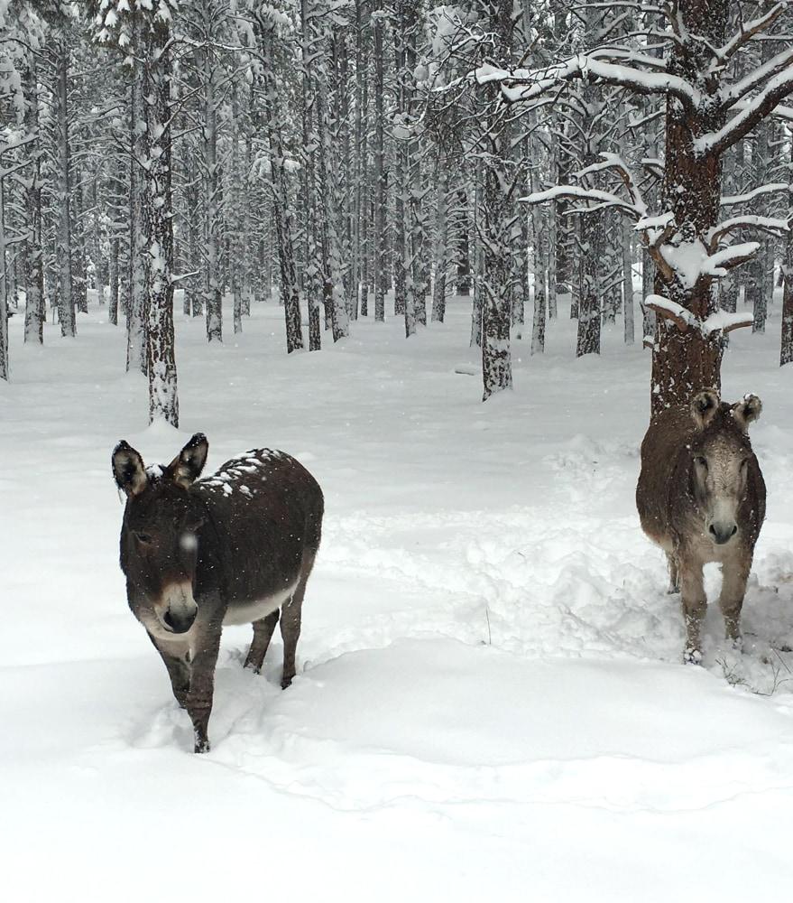 animals snow winter arizona bearizona storms weee wildlife park enjoy nbcnews courtesy